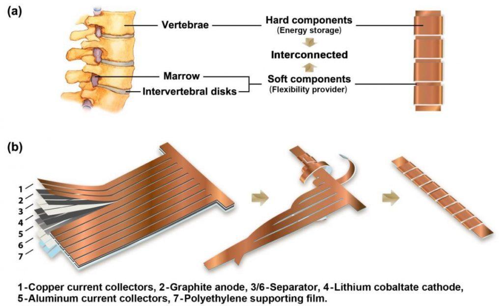 Cette batterie au lithium-ion est flexible comme une colonne vertébrale